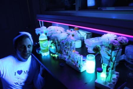 my fluorescent garden