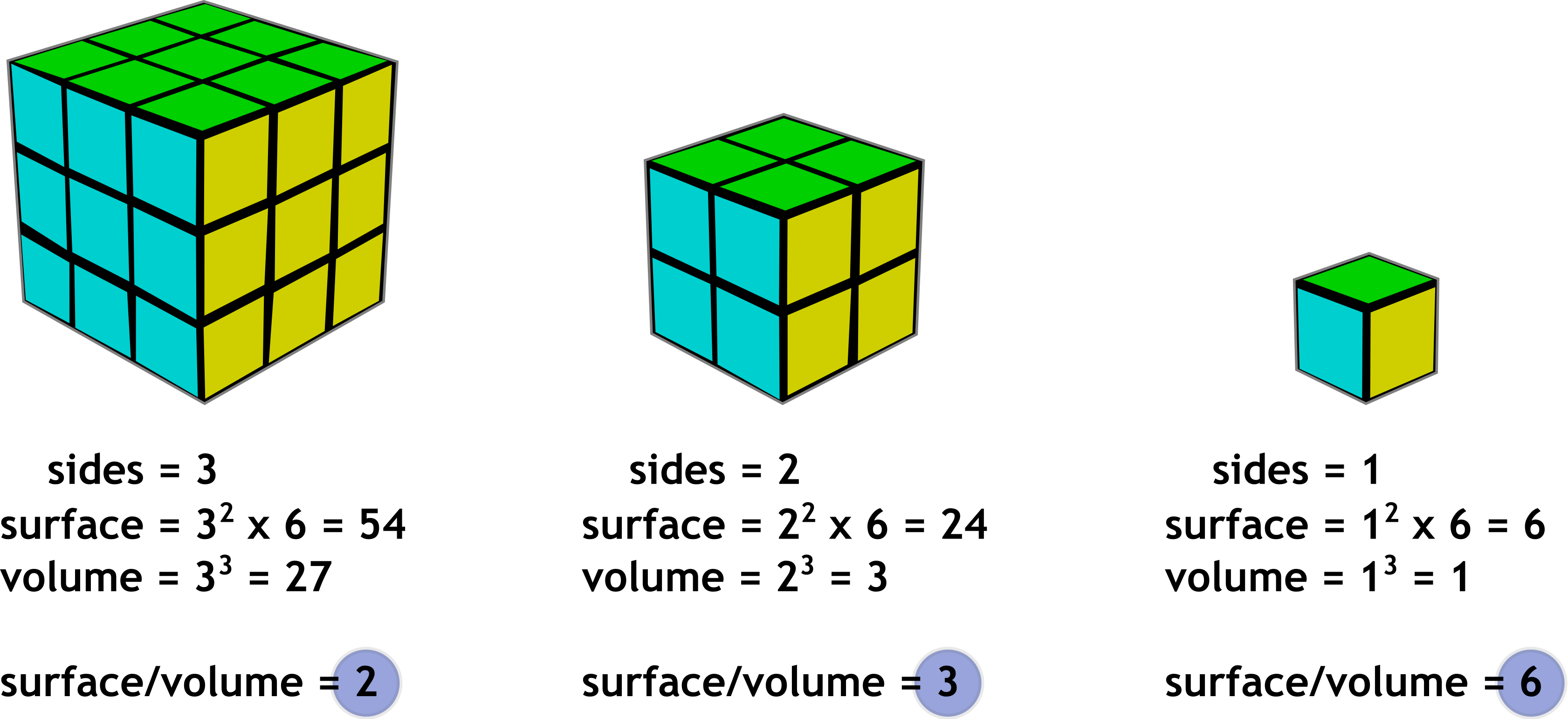what is the relationship between ion exchange and surface area to volume ratio