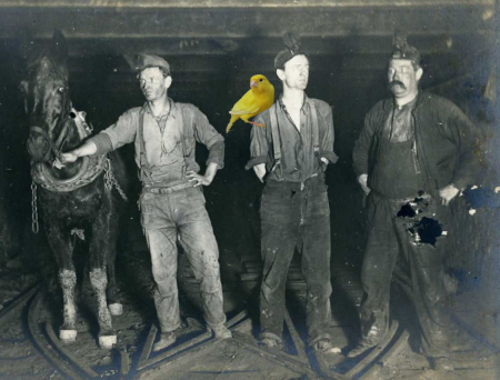 "Figure 3:  ""Canary in the Coal Mine"". Image adapted from source 1 and source 2."