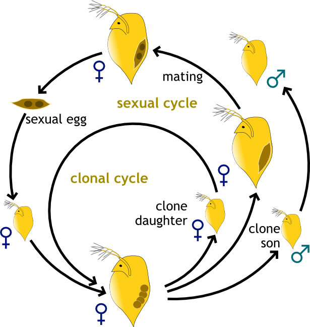 Asexual reproduction plants list