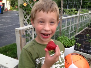 ": My son, chowing down on ""all-natural"" strawberries nearly the size of his fist. Copyright 2013 Rebecca Klaper."