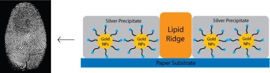 inverse fingerprint gold nanoparticles silver precipitate