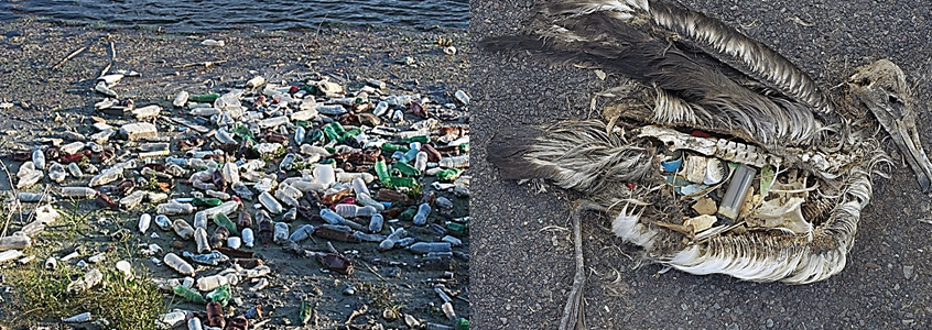 essay on plastic bags health hazards Plastic pollution in india essays plastic products exist as various kinds of forms  all over the planet because of its convenience however, plastic made from.