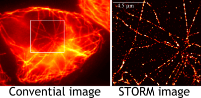 Image generated under research conducted by Dehong Hu, Yumei Xie, Ana Tolic and Galya Orr at Pacific Northwest National Laboratory.