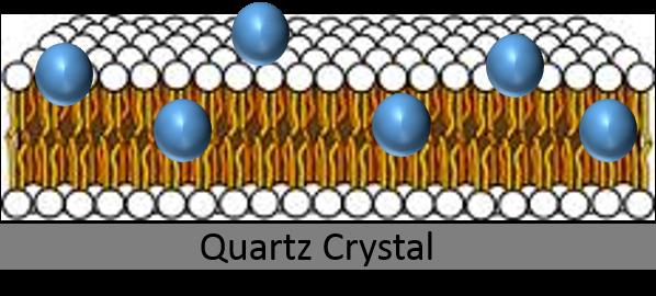 nanoparticles lipid bilayer quartz crystal