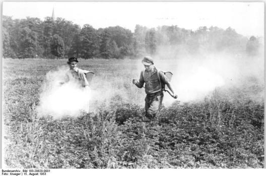 Niños fumigando una plantación con DDT para controlar el escarabajo de papa en Alemania del este. Fuente de imagen.