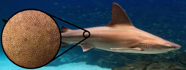 1 - shark skin