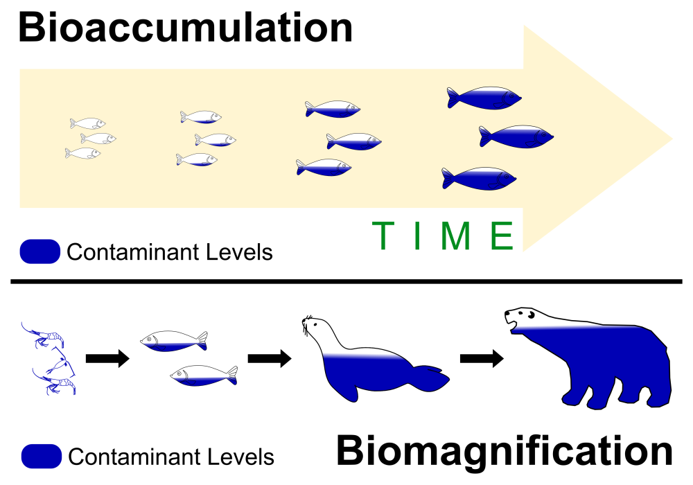 The Cautionary Tale of DDT – Biomagnification, Bioaccumulation, and Research Motivation (3/3)