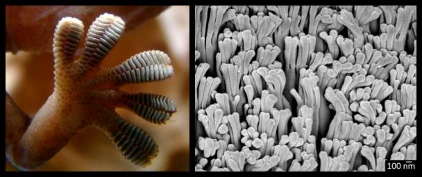 4 - gecko toes and bioinspired setae