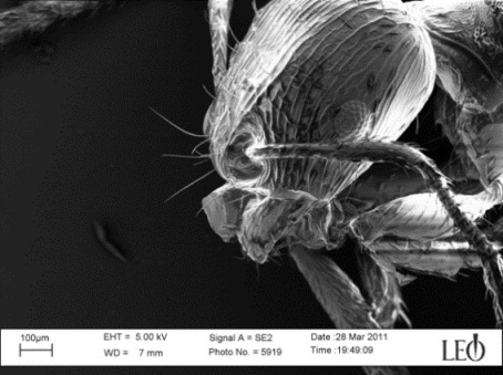 Electron microscope image of an ant