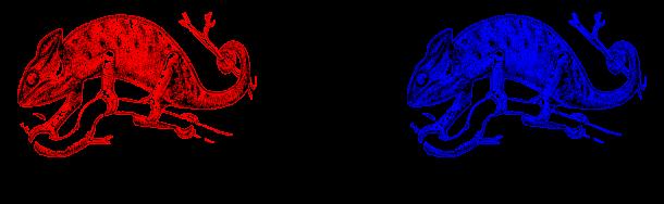 1 chameleons changing color