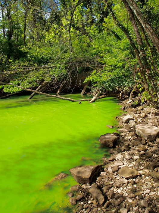 Cyanobacteria bloom in the Potomac River (Image source: http://en.wikipedia.org/wiki/File:Potomac_green_water.JPG)