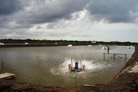 Caption: A shrimp pond in Indonesia. The negative ecological impacts resulting from the irresponsible use of aquaculture can be immense. One aspect that could potentially be improved through the use of nanotechnology is the reduction of contaminated wastewater that flows into the environment. Image source.
