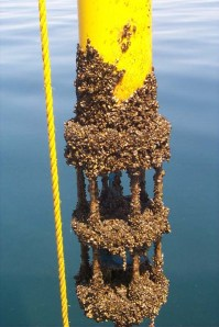 This is what biofouling looks like. Image source.