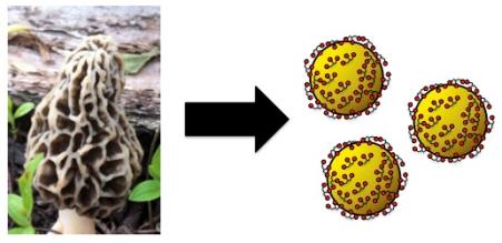 1 - fungi to nanoparticles