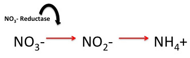 Addition of nitrate reductase catalyzes the chemical conversion of nitrate ions to nitrite ions.