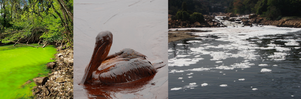 Figure 2. Some of the well-known effects of chemical contaminants in the environment. Eutrophication of a fresh water pond (due to excessive fertilizer runoff), sea birds suffering the effects of the Gulf oil spill, and industrial chemical pollution in a small river.