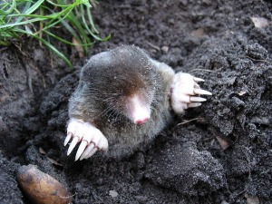 a happy mole