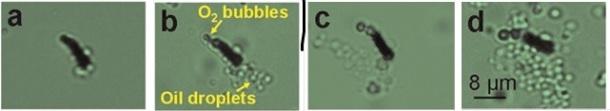 oilspill-nanomachines