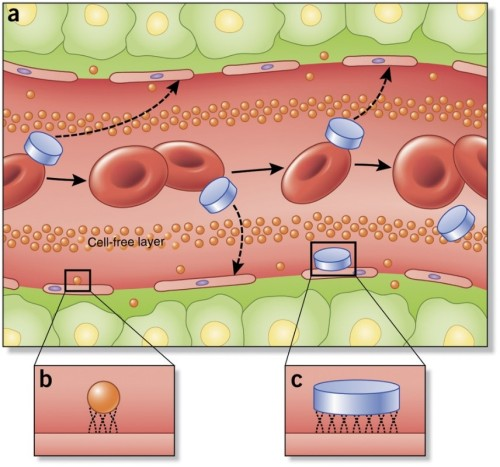 Drawing of nanoparticles in blood vessel