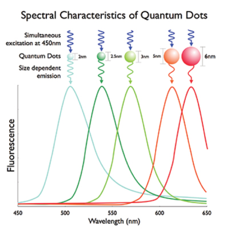spectral absorption and emission of quantum dots