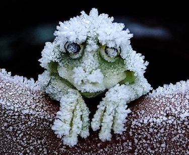 frosty frog