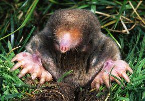 Happy Mole Day2016!