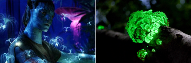 Avatar/fungus