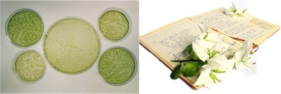 petri dishes, book with plant