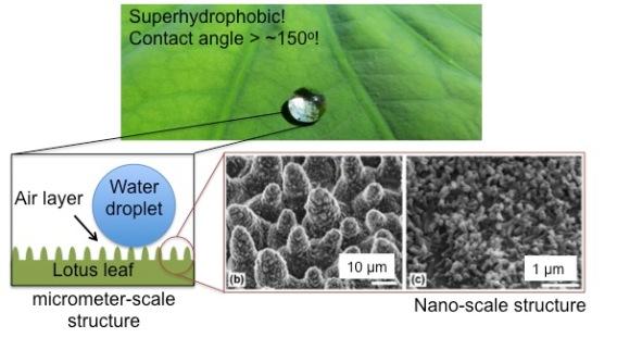 superhydrophobicity