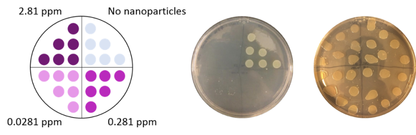 bactericidal
