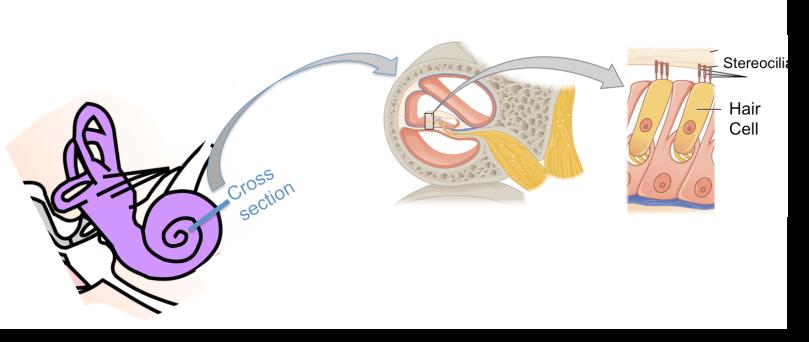 Nano in your ear! Nanotechnology and hearing – Sustainable Nano