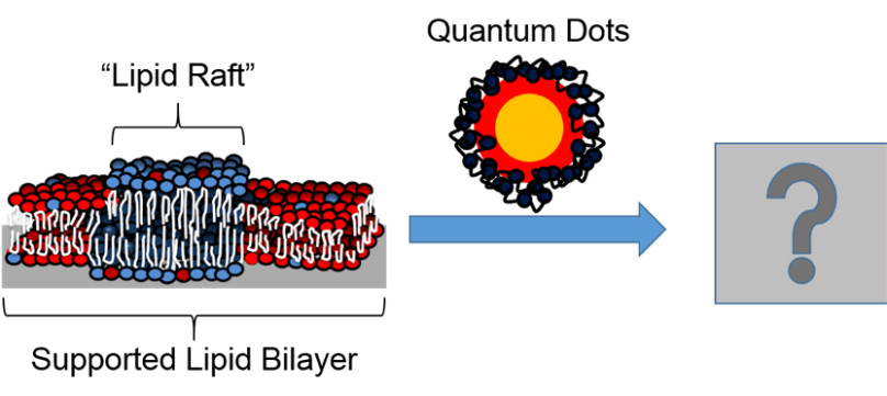 lipid raft