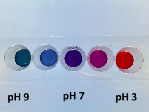 cabbage pH